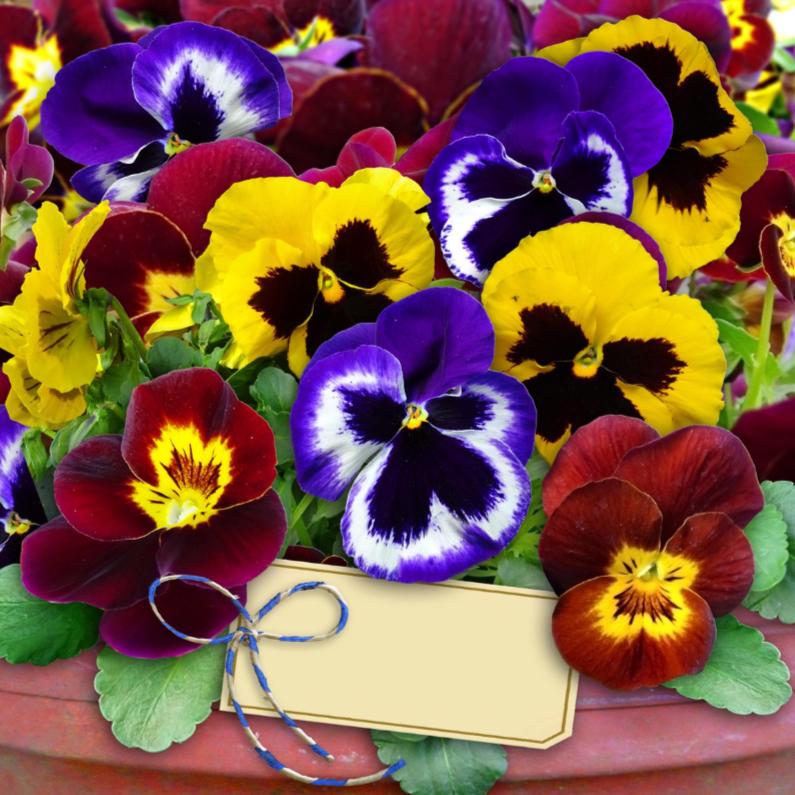 Bloemenkaarten - Mooie bloemenkaart gemengde Violen in pot