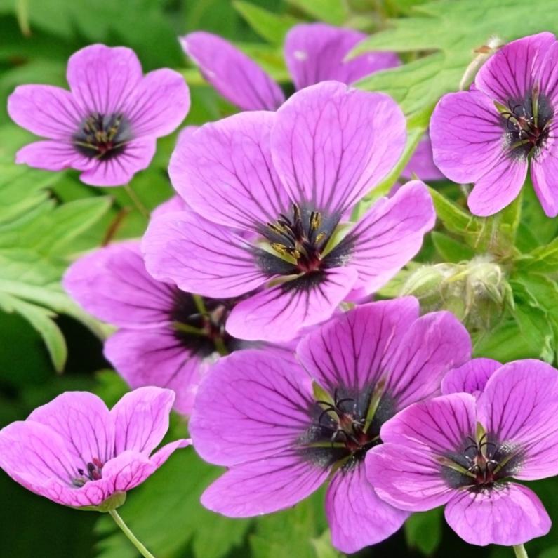 Bloemenkaarten - Mooie bloemenkaart met lila bloemen voor bv felicitatie