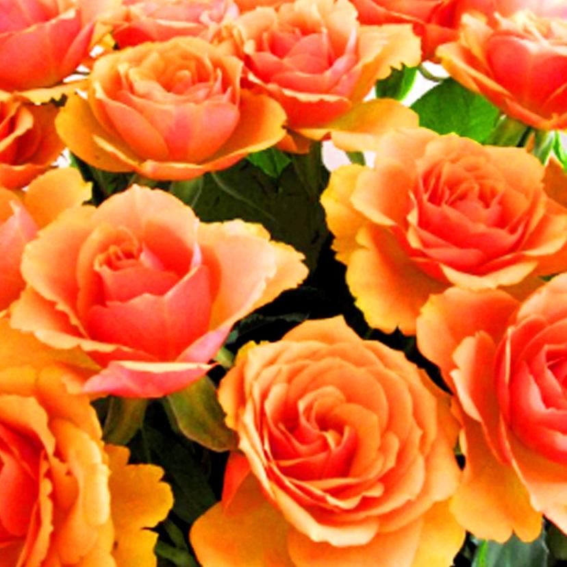 Bloemenkaarten - Oranje rozen