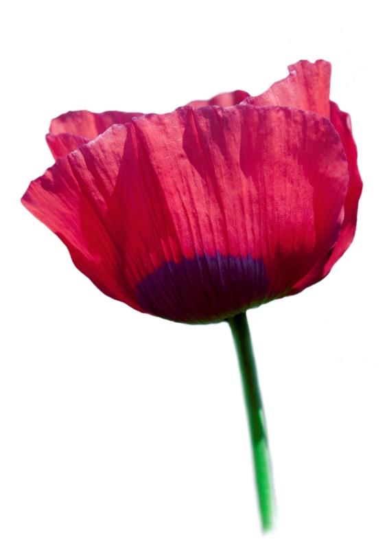 Bloemenkaarten - pink flower