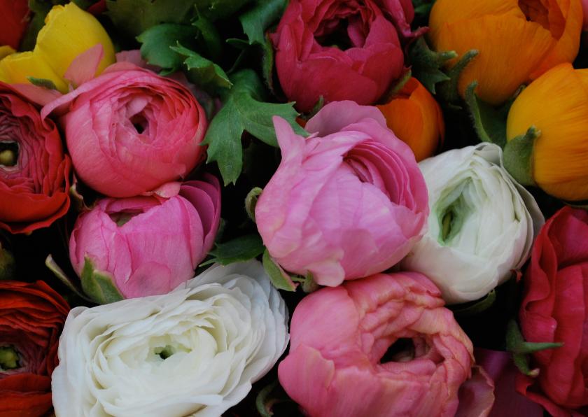 Bloemenkaarten - Ranonkel bloemen