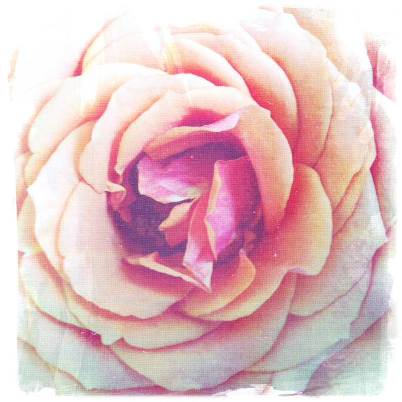 Bloemenkaarten - roosroze
