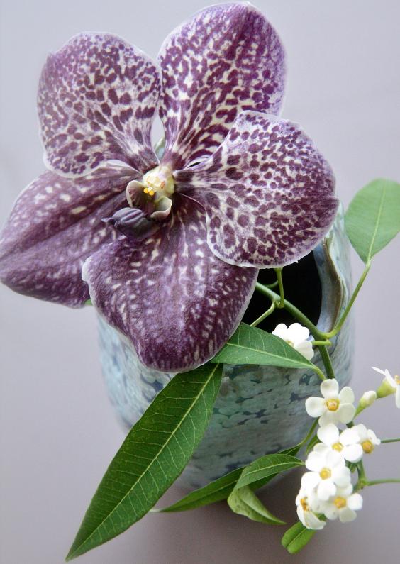 Bloemenkaarten - Sprirituele kaart paars