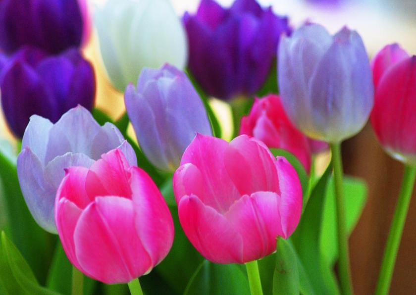 Bloemenkaarten - Tulpen in roze en paars