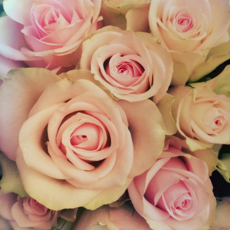 Bloemenkaarten - zachte rozen
