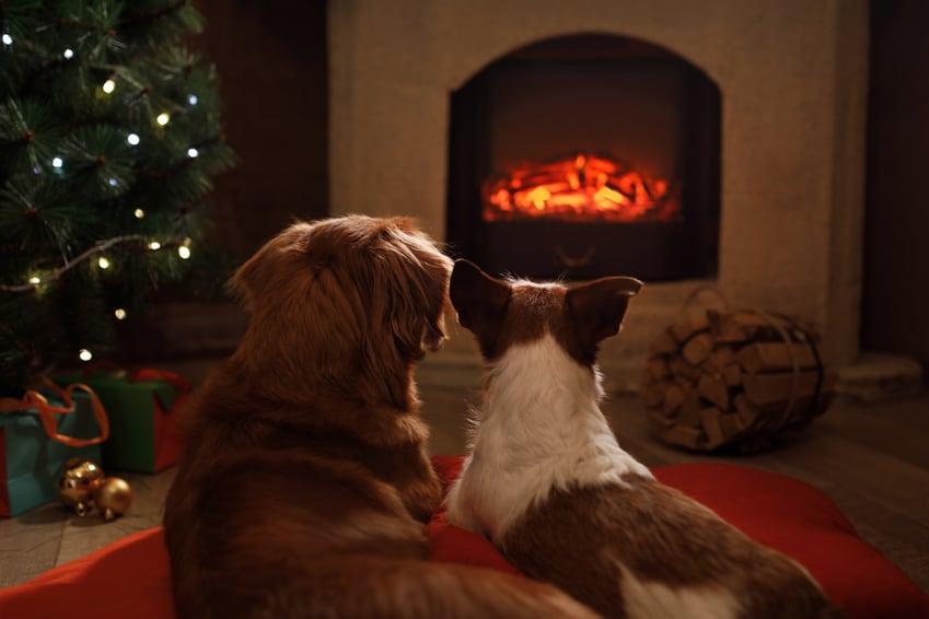 Kerstkaart met je hond