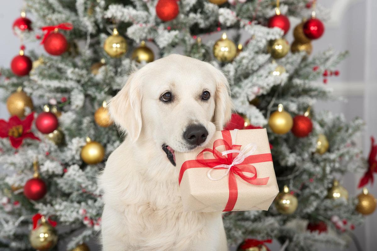Kerstkaart met hond tips foto's