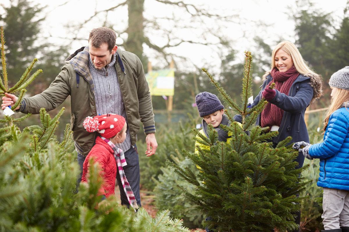 echte kerstboom of kunstkerstboom