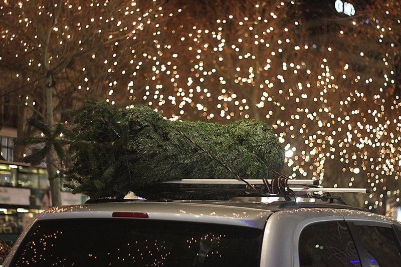 Echte kerstboom kopen