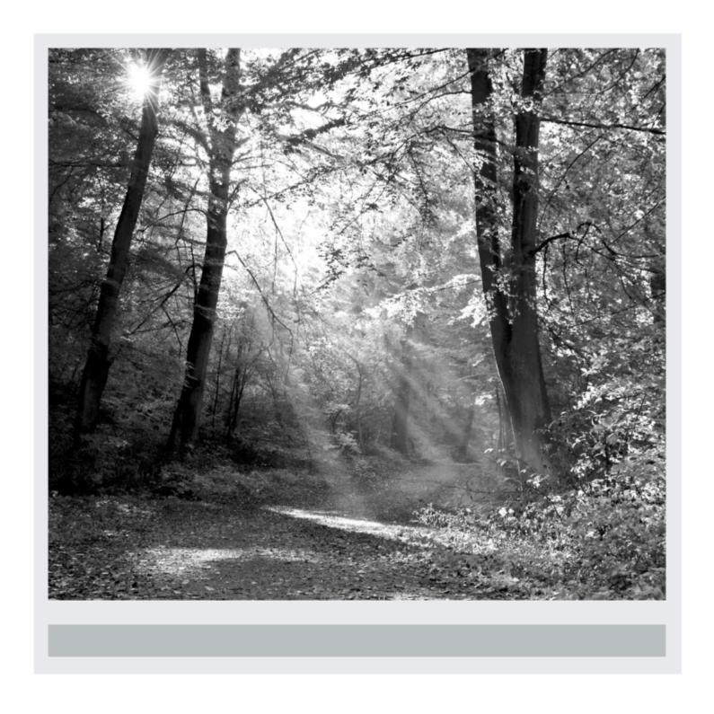 Condoleancekaarten - 4K zwartwit foto zonnestralen op bospad