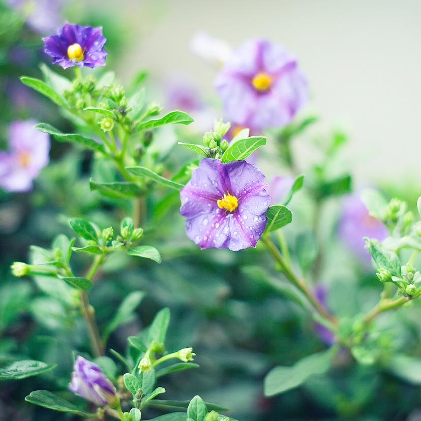 Condoleancekaarten - afscheid bloemetjes paars