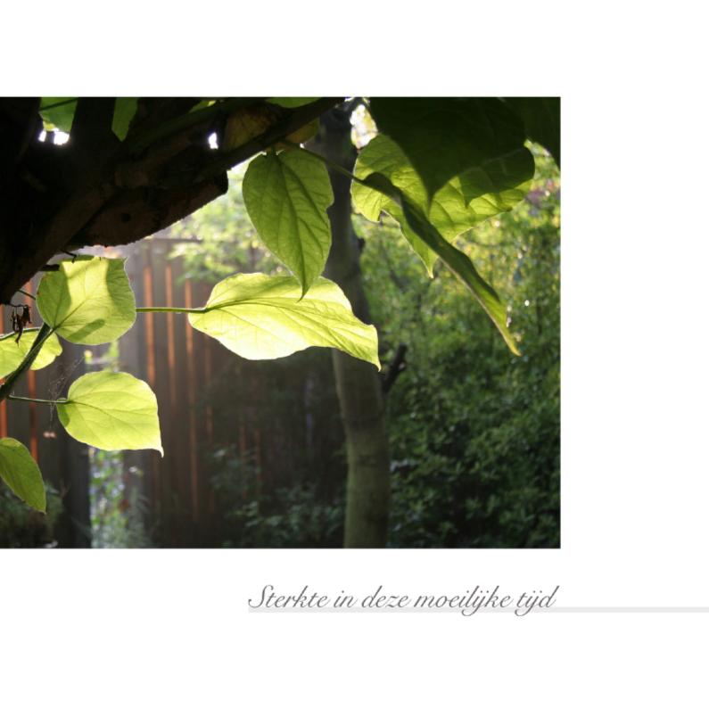 Condoleancekaarten - Bladeren in de zon