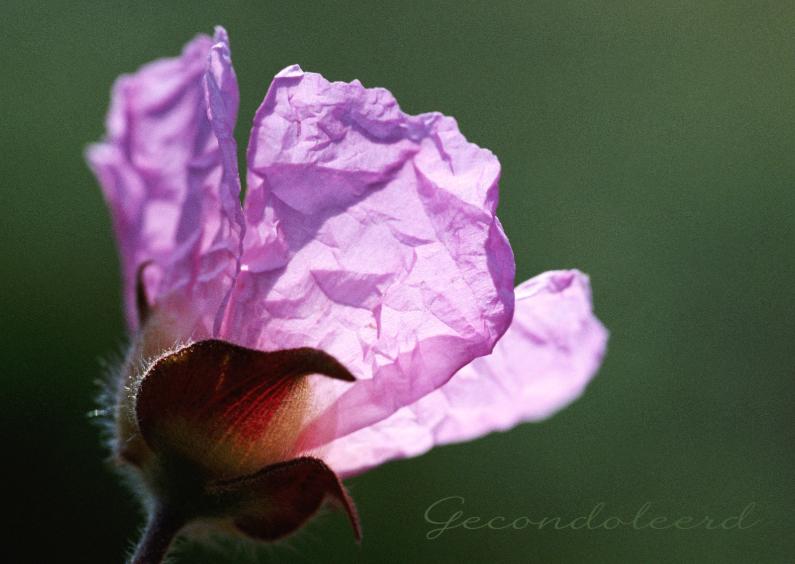 Condoleancekaarten - Condoleance bloemenkaart - BK