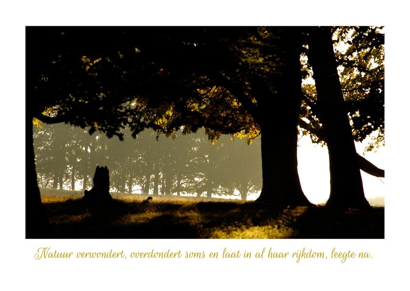 Condoleancekaarten - Condoleance Bomen in tegenlicht