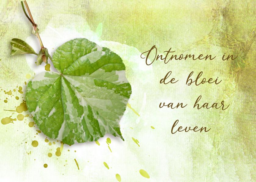 Condoleancekaarten - Condoleance kaart fris groen blad