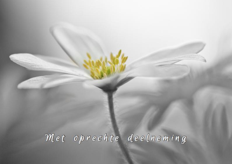 Condoleancekaarten - Condoleance met anemonen
