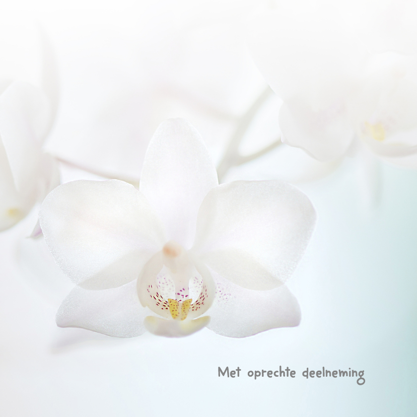 Condoleancekaarten - Condoleance witte orchidee