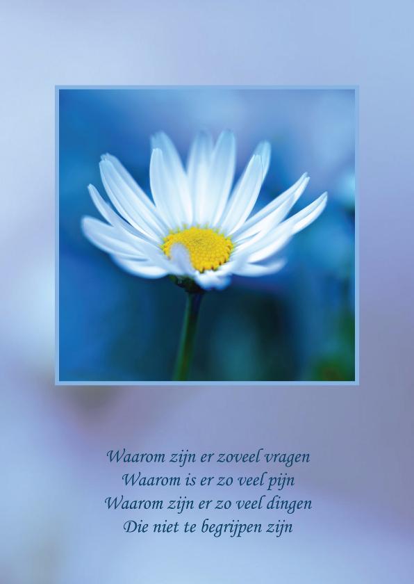 Condoleancekaarten - Condoleancekaart Madeliefje