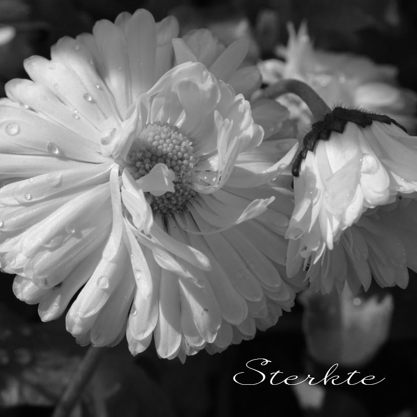 Condoleancekaarten - Condoleancekaart witte bloem dauwdruppels - SK
