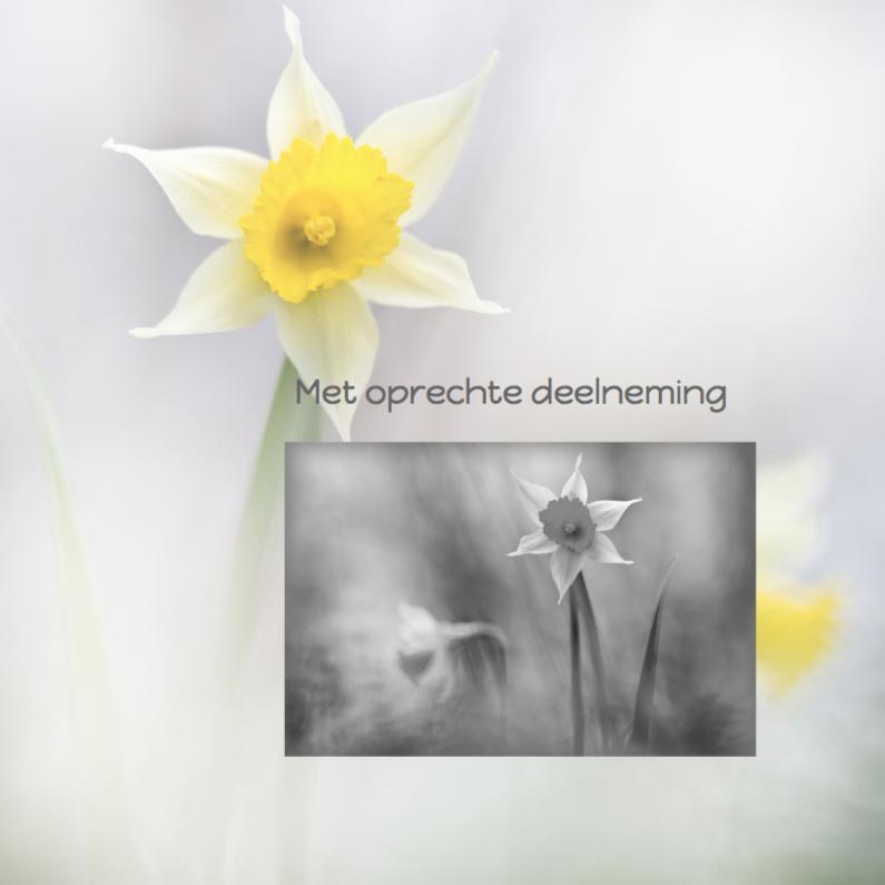 Condoleancekaarten - Condoleren met narcissen