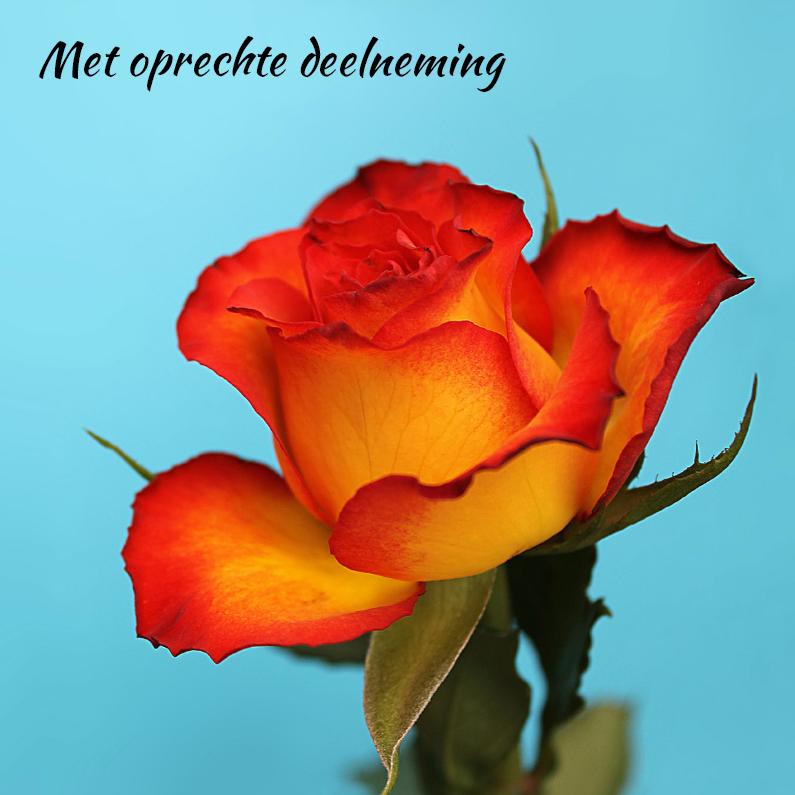 Condoleancekaarten - Deelneming,  met oranje roos