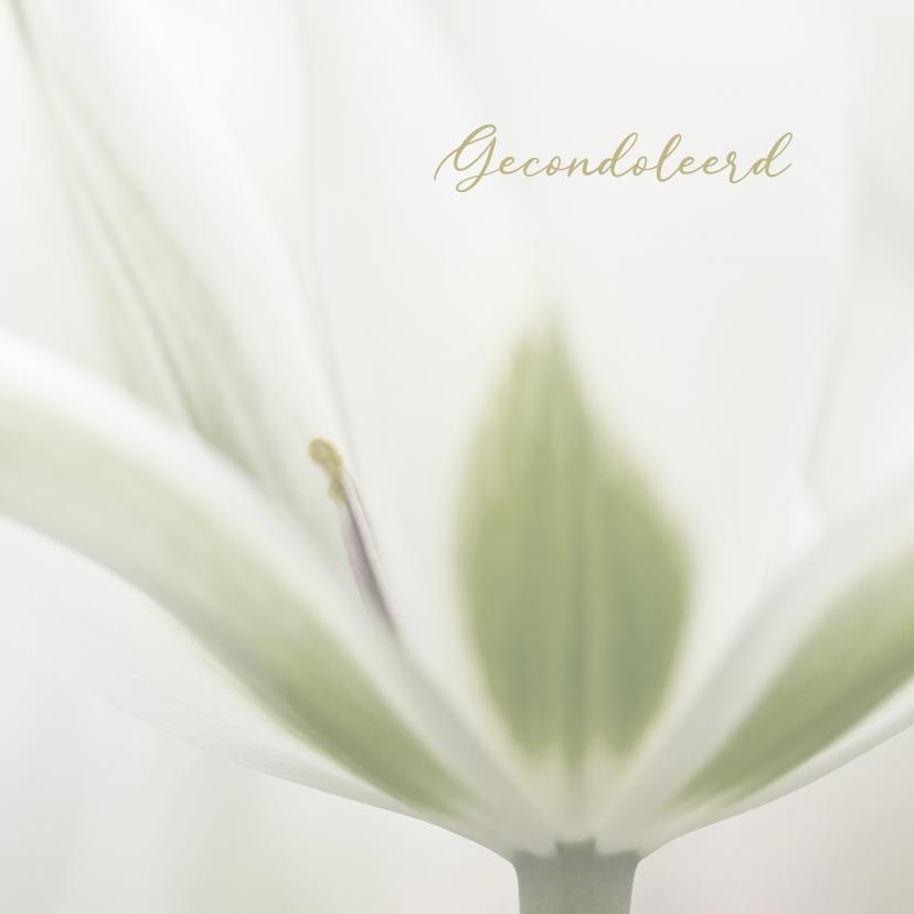 Condoleancekaarten - Deelneming met witte tulp