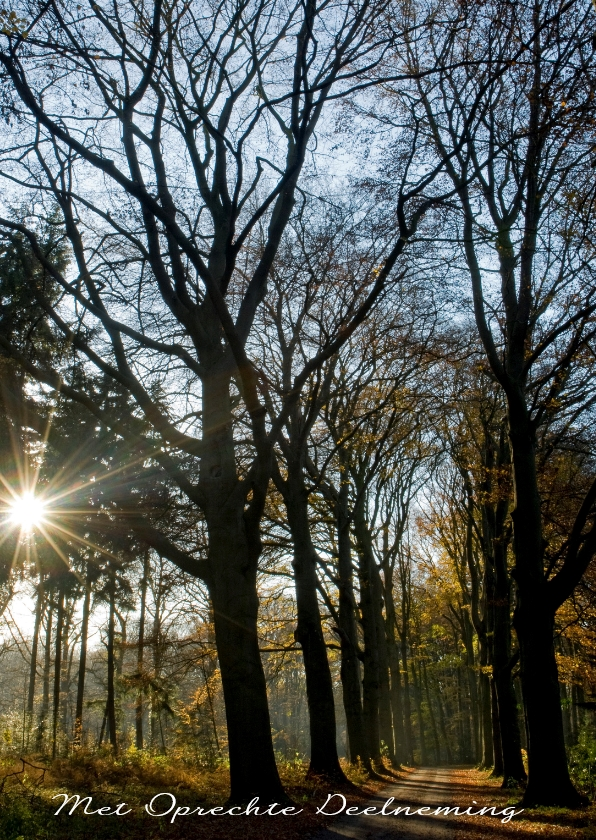 Condoleancekaarten - Donker bomenpad met lage zon