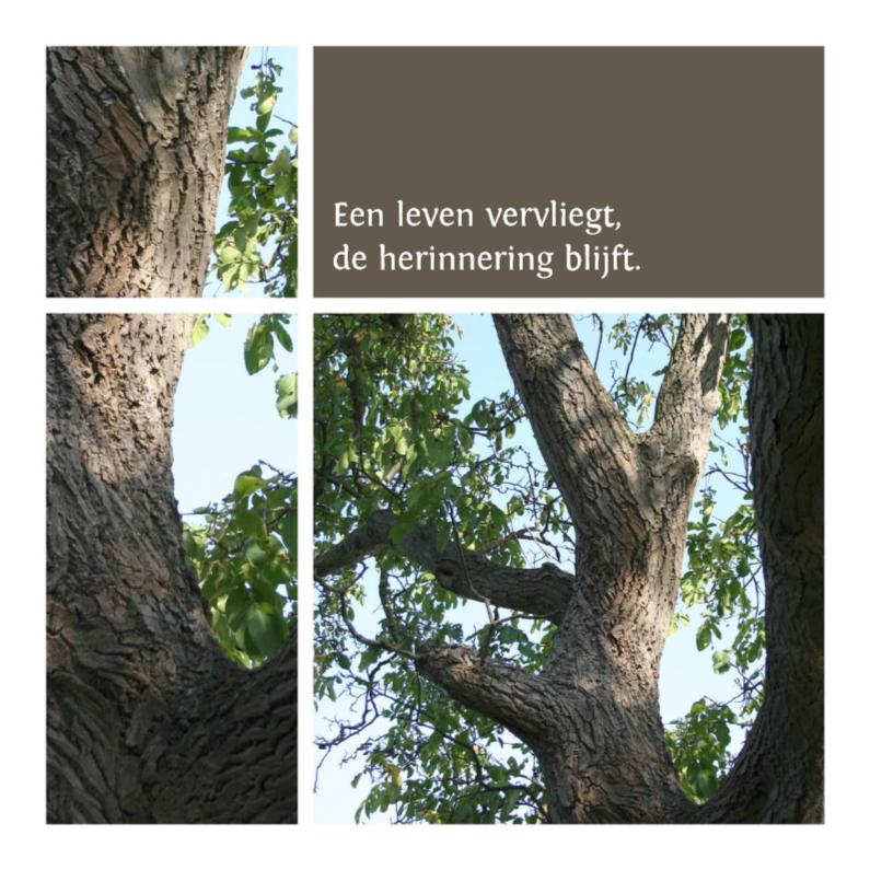 Condoleancekaarten - een leven vervliegt - boom