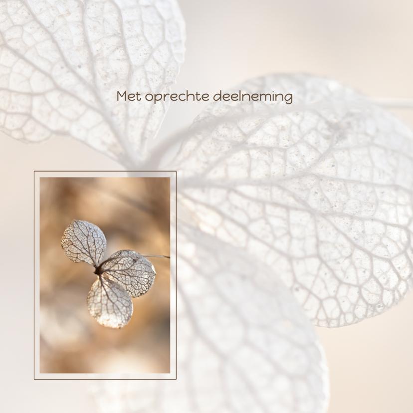 Condoleancekaarten - Hortensiabloem in kader