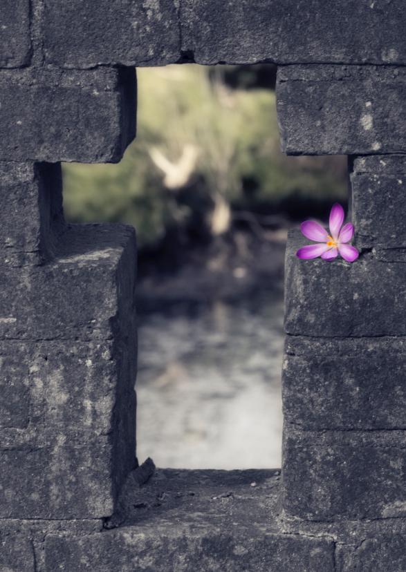 Condoleancekaarten - kruis met bloem