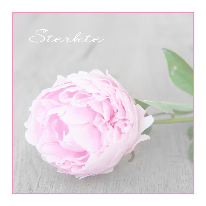 Condoleancekaarten - Pioenroos Single