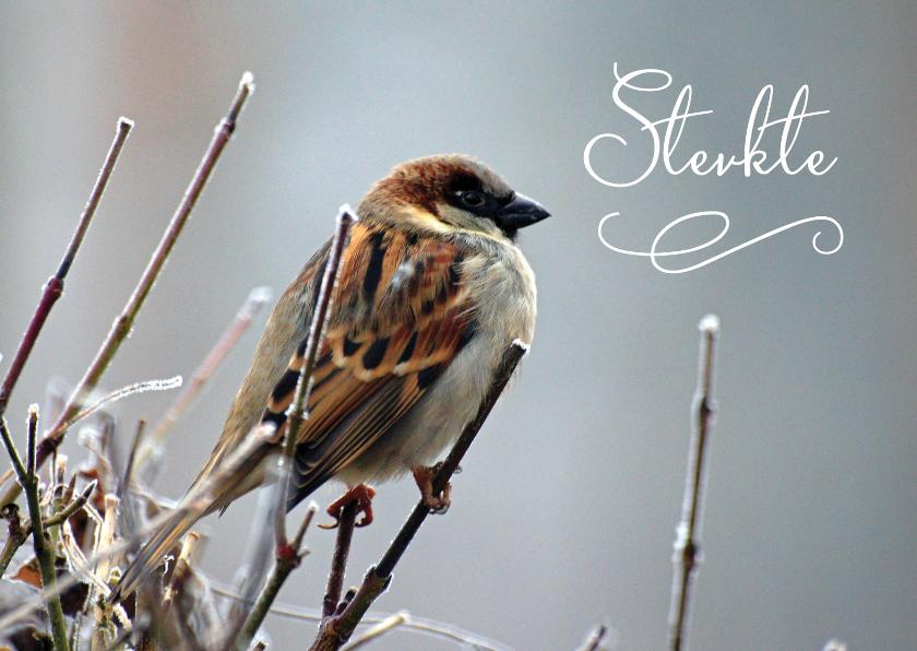 Condoleancekaarten - Sterkte kaart foto vogel