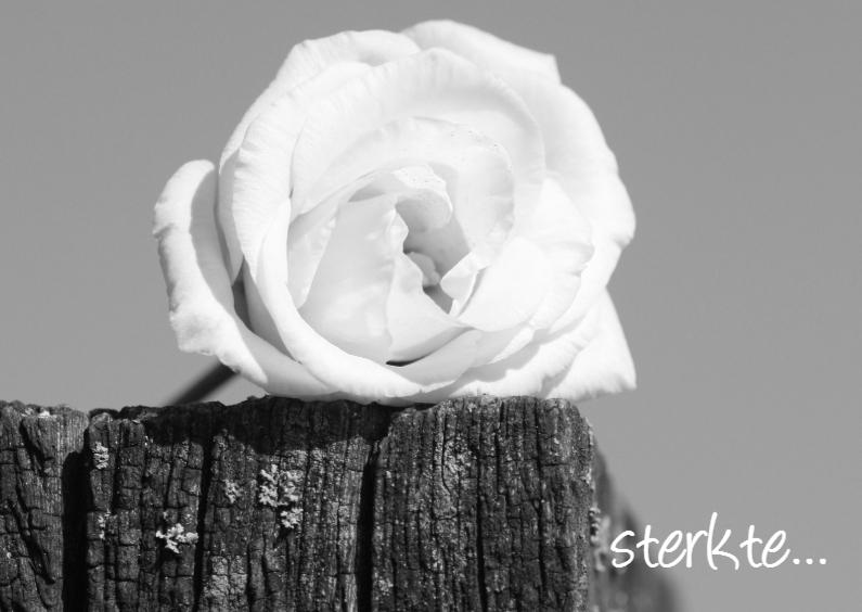 Condoleancekaarten - sterkte roos