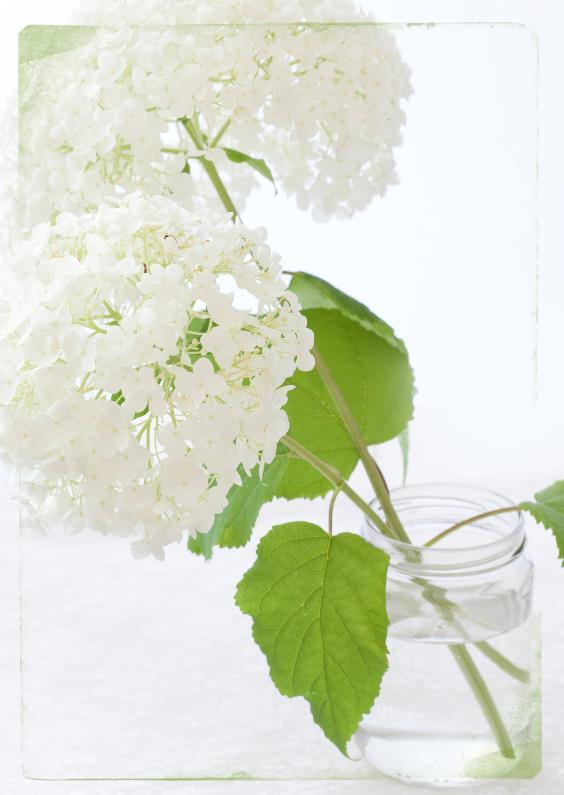 Condoleancekaarten - Witte bloem liefs