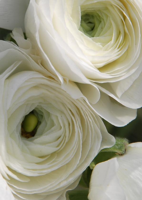 Condoleancekaarten - Witte bloemen av
