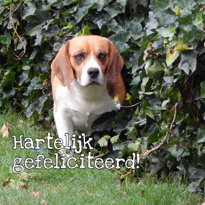 Dierenkaarten - Beagle