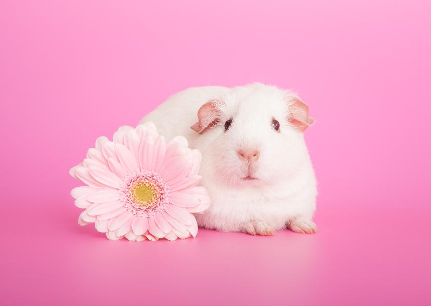 Dierenkaarten - Dierenkaart | Cavia met bloem | Roze