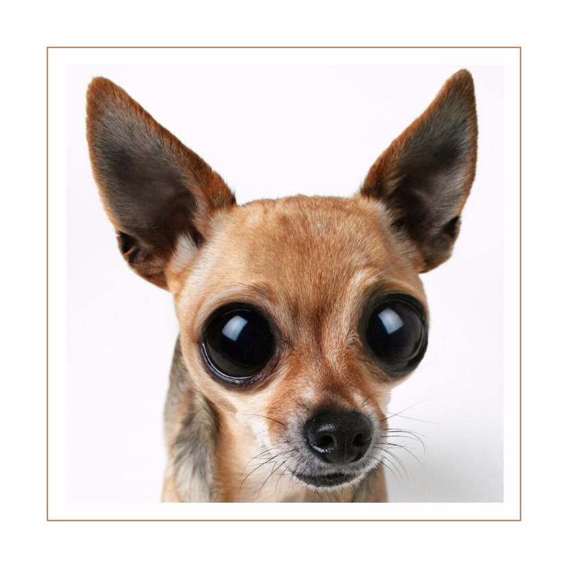 Dierenkaarten - Dierenkaart Chihuahua