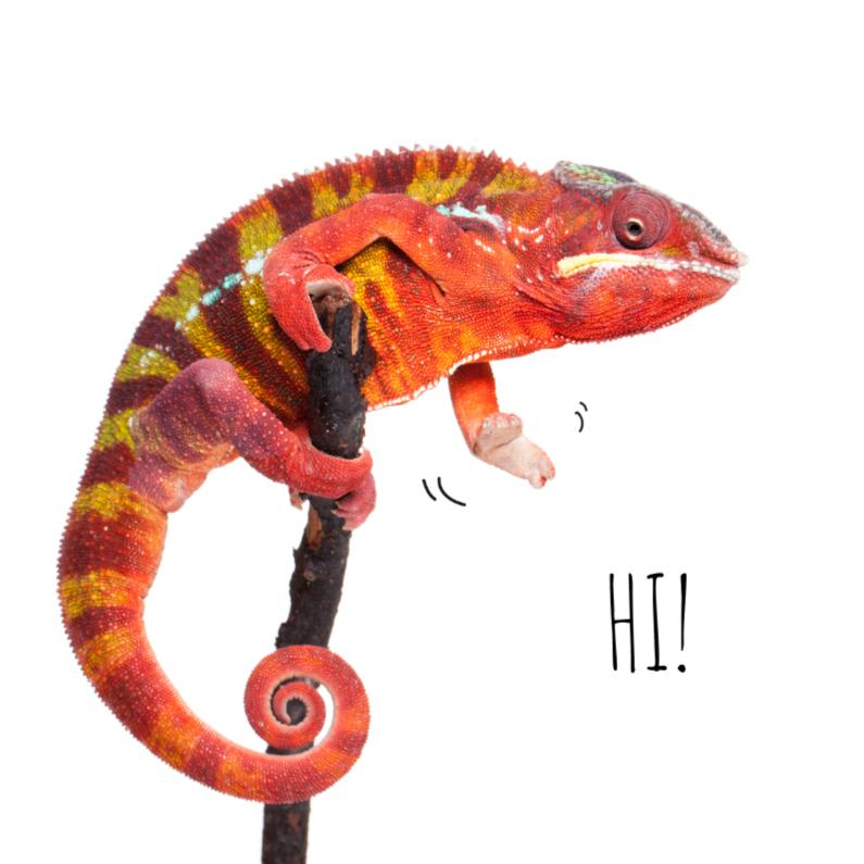 Dierenkaarten - Dierenkaart Kameleon - Saying Hi!