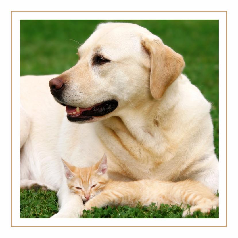 Dierenkaarten - Dierenkaart labrador met kat
