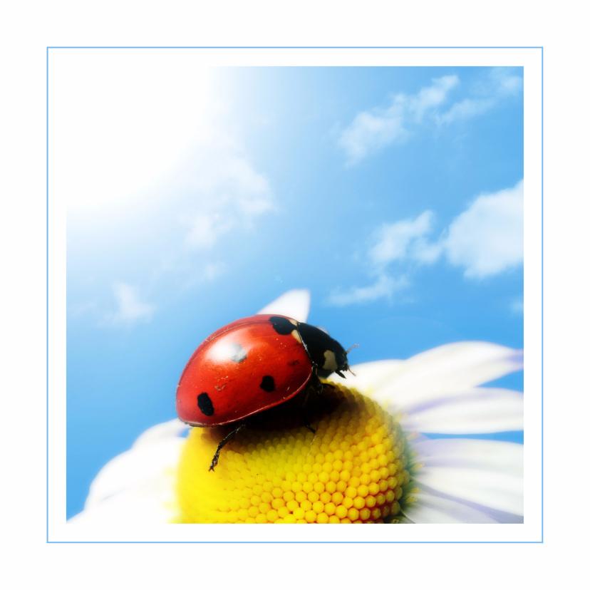 Dierenkaarten - Dierenkaart lieveheersbeestje
