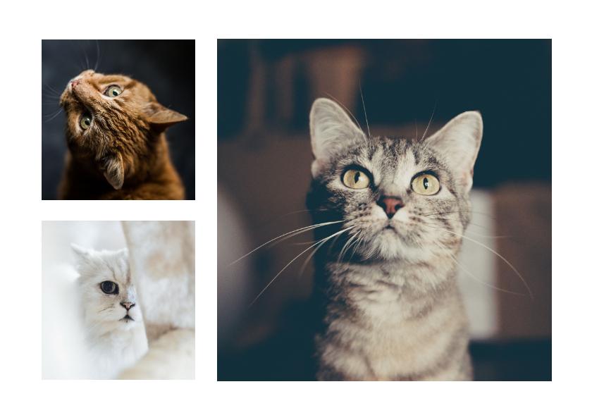 Dierenkaarten - Dierenkaart met 3 foto's van je huisdieren