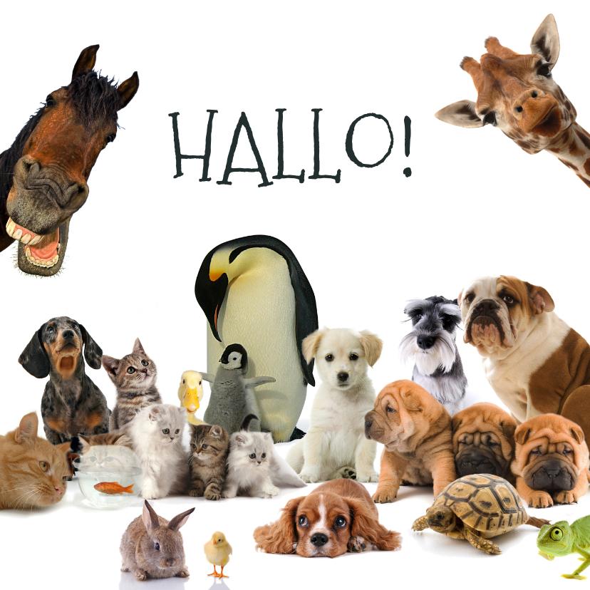 Dierenkaarten - Dierenkaart met allemaal verschillende dieren