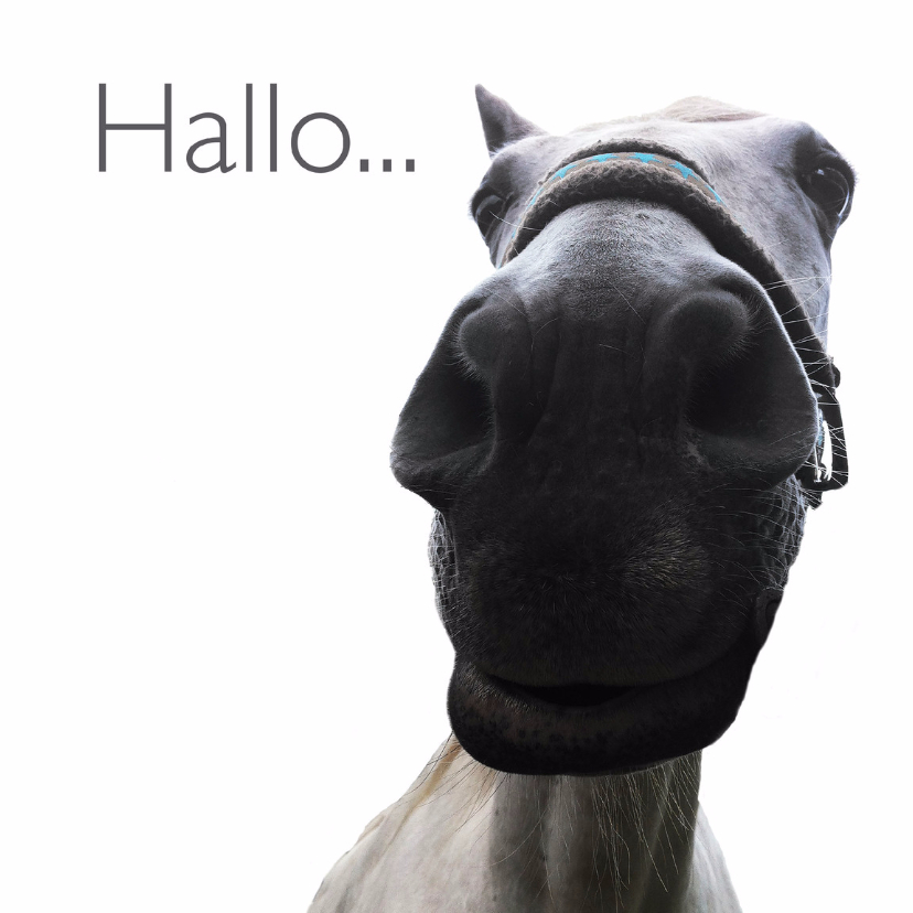 Dierenkaarten - Dierenkaart paard hallo