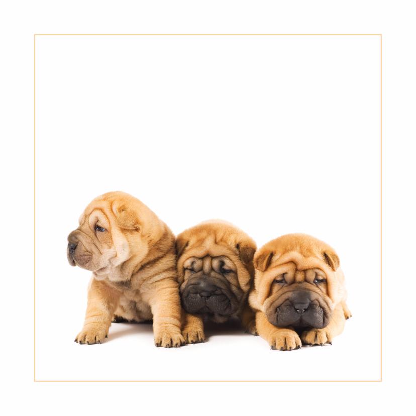 Dierenkaarten - Dierenkaart Sharpei puppies