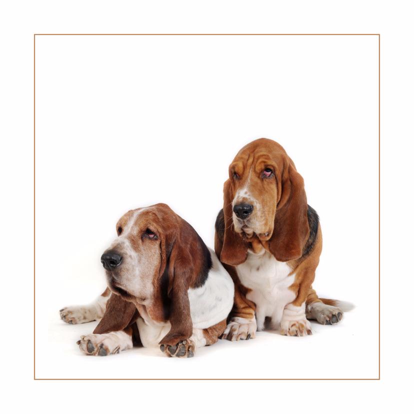 Dierenkaarten - Dierenkaart Twee lieve honden