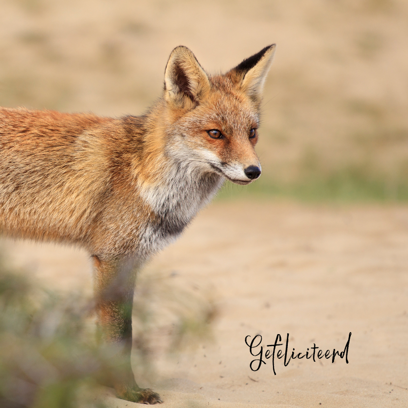 Dierenkaarten - Dierenkaart vos in de duinen