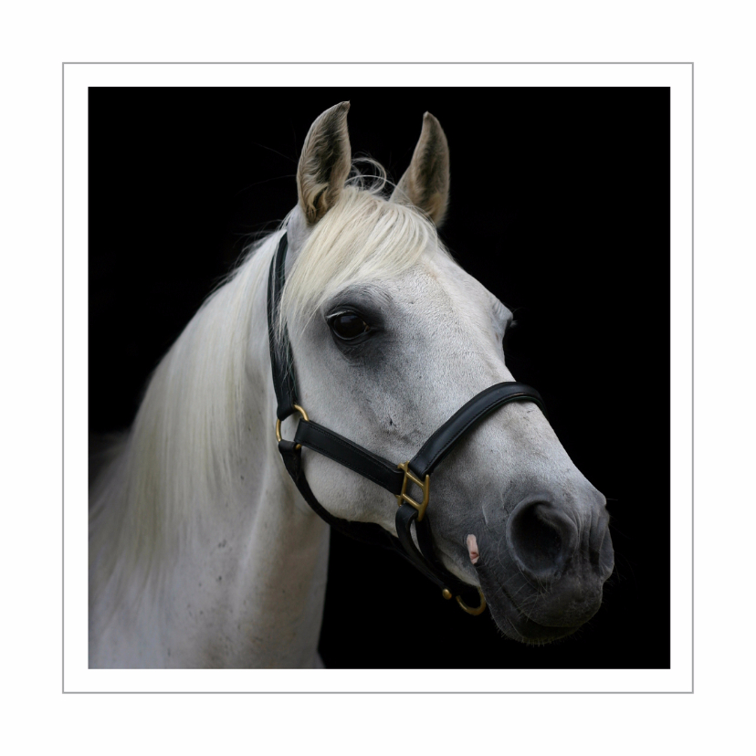 Dierenkaarten - Dierenkaart wit paard 2