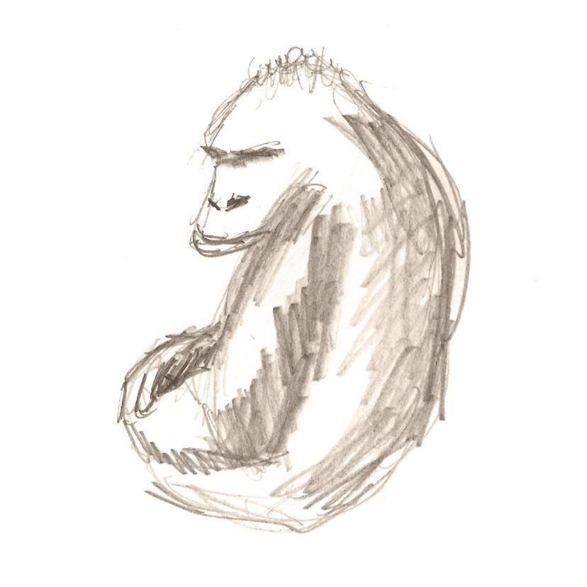 Dierenkaarten - Dierenkaarten - Gorilla