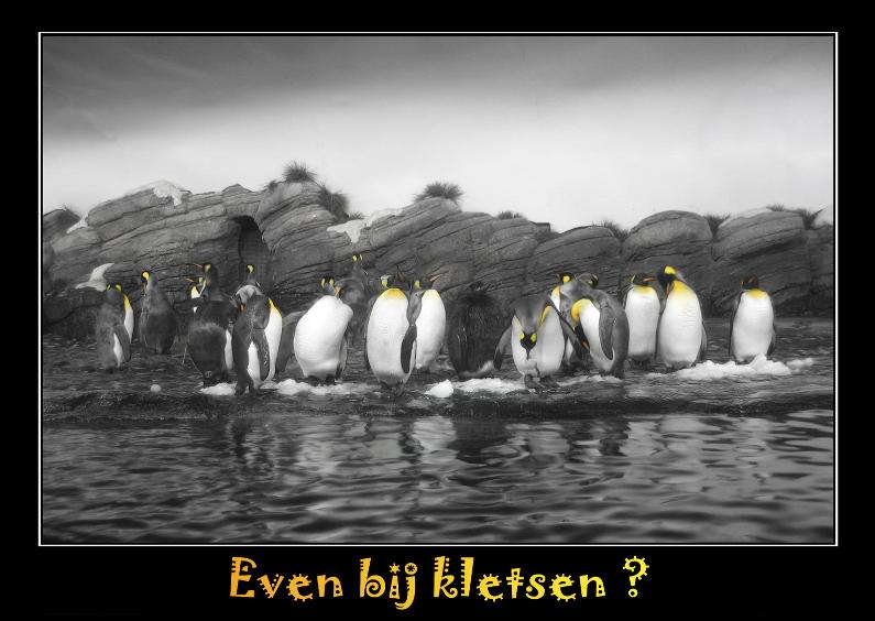 Dierenkaarten - Even bijkletsen Pinguinteam